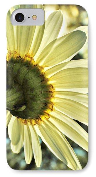 Sunny Shasta Daisy IPhone Case by Kelly Nowak