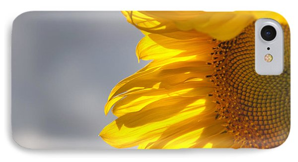 Sunny Sunflower IPhone Case by Cheryl Baxter