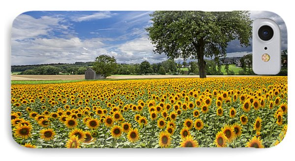 Sunny Sunflowers Phone Case by Debra and Dave Vanderlaan
