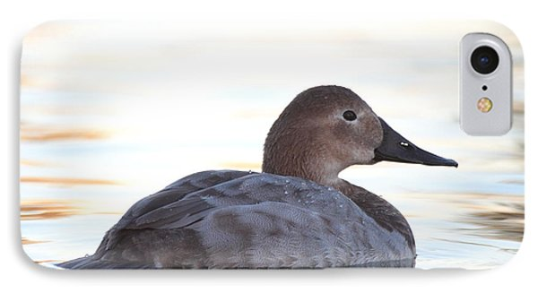 Sunrise Canvasback IPhone Case by Ruth Jolly