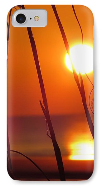 IPhone Case featuring the photograph Sunrise Plant by Nikki McInnes