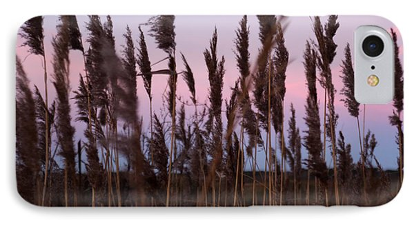Sunrise Through The Marsh Grass IPhone Case