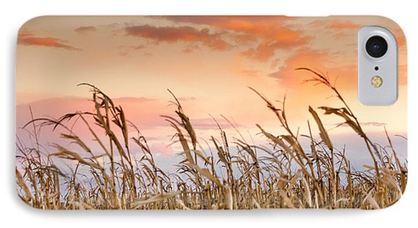 IPhone Case featuring the photograph Sunset Against The Cornstalks by Dawn Romine