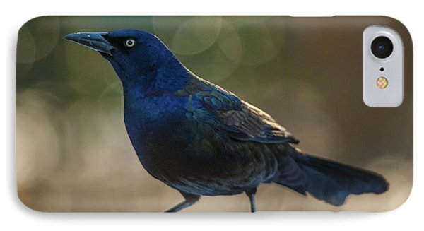 Sunset Grackle IPhone Case by Jim Moore