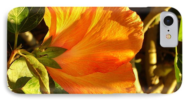 Sunset Hibiscus IPhone Case by Lew Davis