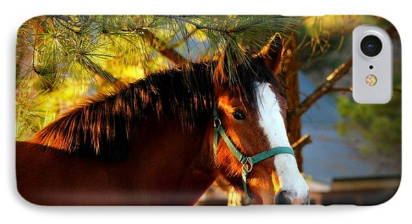 Sunset Horse IPhone Case by Reid Callaway