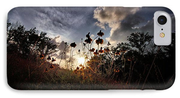Sunset On Daisy IPhone Case by Linda Unger