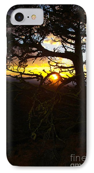 Sunset Through Branch IPhone Case by Jane Axman