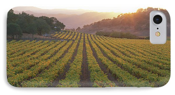 Sunset, Vineyard, Napa Valley IPhone Case by Panoramic Images