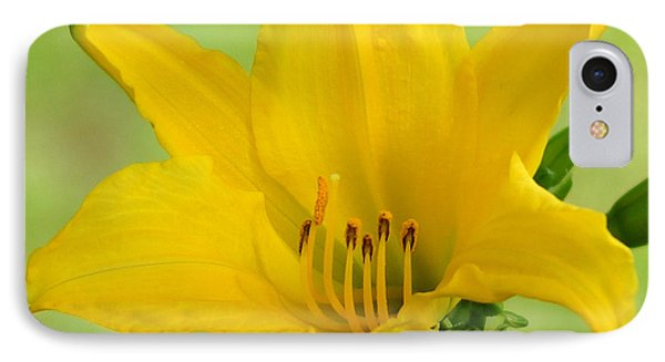 Sunshine In A Flower Phone Case by Kim Pate