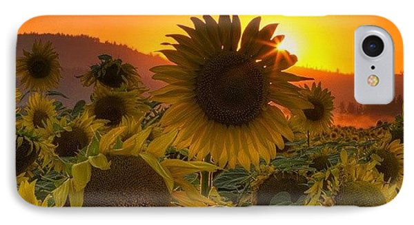 Sunst And Sunfloers  #sunset IPhone Case