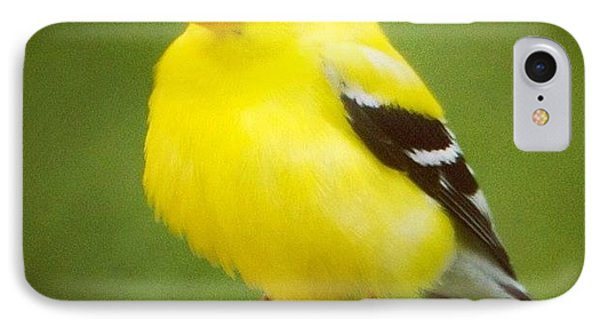 Super Fluffed Up Goldfinch IPhone Case by Heidi Hermes