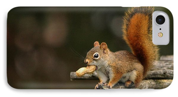 Surprised Red Squirrel With Nut Portrait Phone Case by Debbie Oppermann