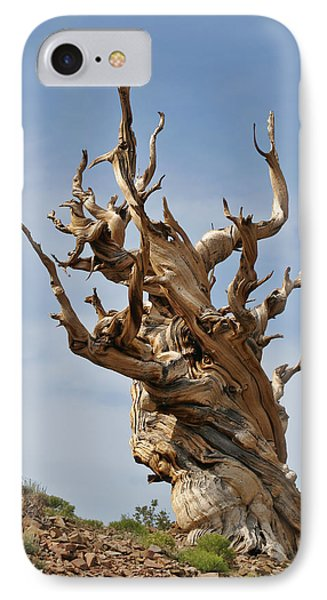 Survival Expert Bristlecone Pine Phone Case by Christine Till