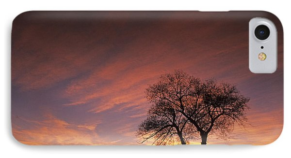 Susie's Tree IPhone Case by Latah Trail Foundation
