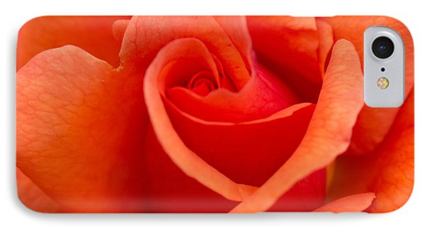 Suzanne's Rose IPhone Case by Cathy Donohoue