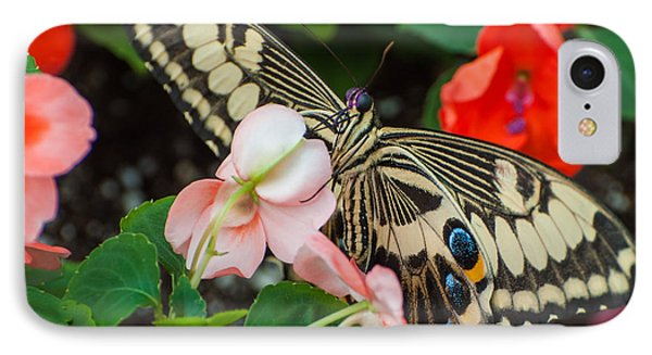 Swallow Tail Butterfly IPhone Case