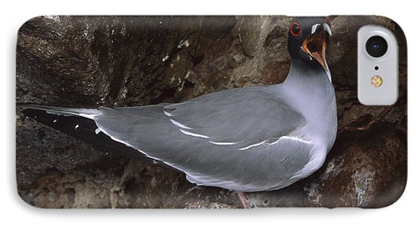 Swallow-tailed Gull And Chick Calling IPhone Case by Tui De Roy
