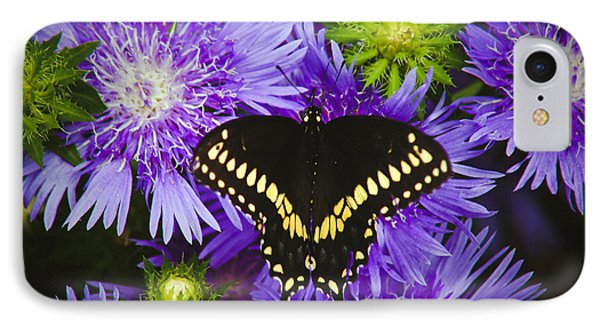 Swallowtail And Astor IPhone Case by Debra Crank