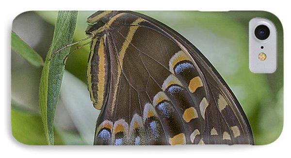 Swallowtail IPhone Case by Anne Rodkin