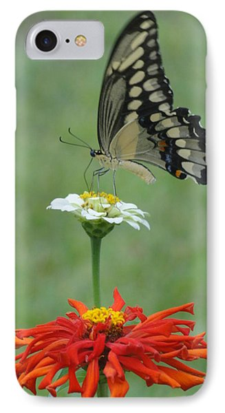 Swallowtail Butterfly And Zinnias IPhone Case by Cindy Croal
