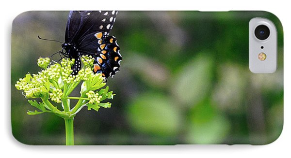 Swallowtail Butterfly Phone Case by Lorri Crossno