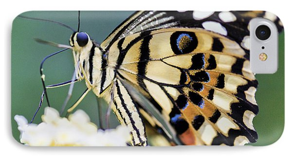 Swallowtail Butterfly IPhone Case by Maj Seda