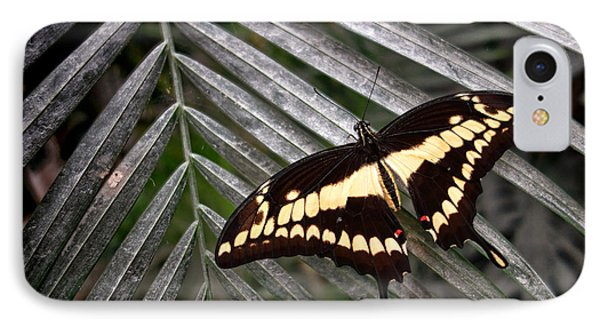 Swallowtail Butterfly Phone Case by Olivier Le Queinec