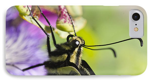 Swallowtail Butterfly Phone Case by Priya Ghose