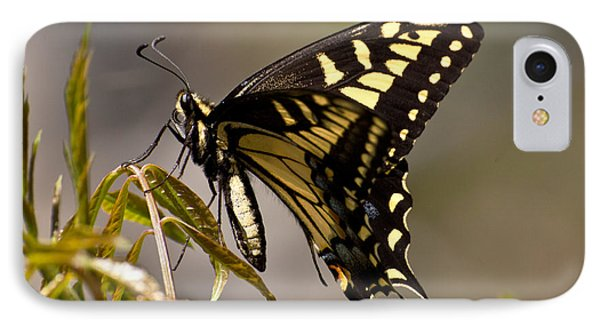 Swallowtail In Profile IPhone Case