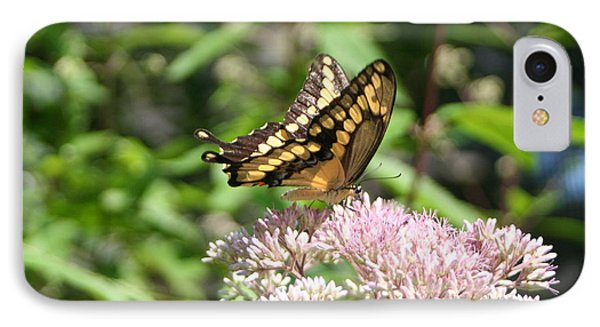 IPhone Case featuring the photograph Swallowtail by Karen Silvestri