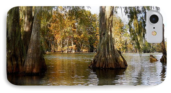 Swamp - Cypress Trees IPhone Case