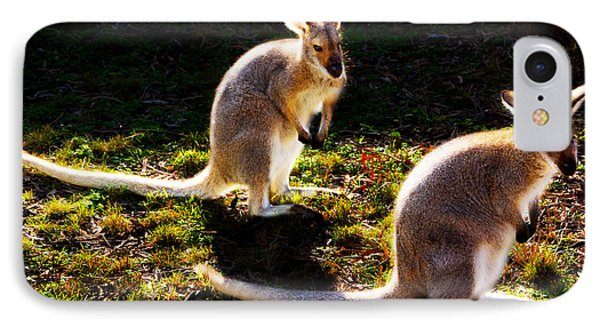 Swamp Wallabies IPhone Case by Miroslava Jurcik