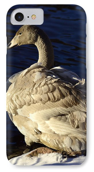 Swan Sits And Looks Out Over The Lake Phone Case by Tommytechno Sweden