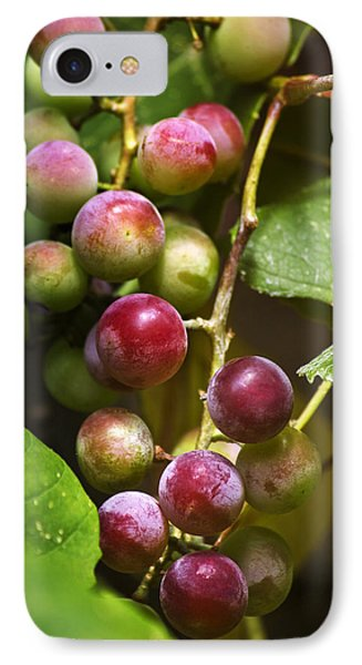 Sweet Grapes Phone Case by Christina Rollo