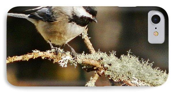 Sweet Little Chickadee IPhone Case by VLee Watson