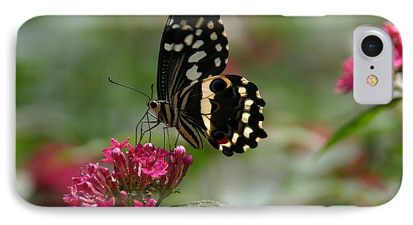IPhone Case featuring the photograph Sweet Nectar by Denyse Duhaime