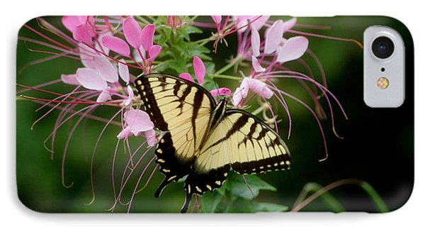 Sweet Swallowtail IPhone Case by Living Color Photography Lorraine Lynch