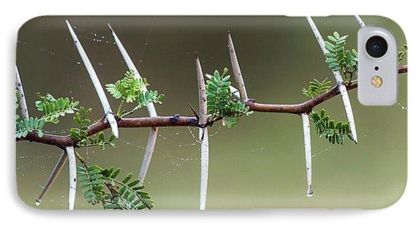 Sweet Thorn (vachellia Karroo) IPhone Case by Peter Chadwick