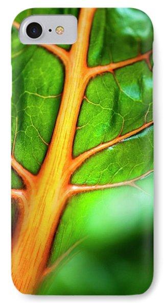 Swiss Chard (beta Vulgaris) Leaf IPhone Case