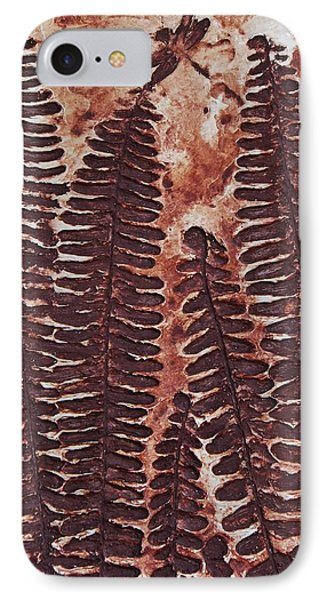 Sword Fern Fossil Phone Case by Katherine Young-Beck