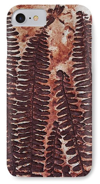 Sword Fern Fossil IPhone Case by Katherine Young-Beck