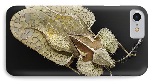 Sycamore Lace Bug Sem IPhone Case by Albert Lleal