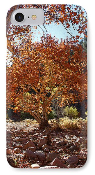 Sycamore Trees Fall Colors IPhone Case by Tom Janca