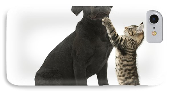 Tabby Male Kitten & Black Labrador IPhone Case