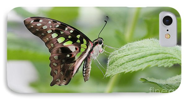 Tailed Jay Butterfly #3 IPhone Case