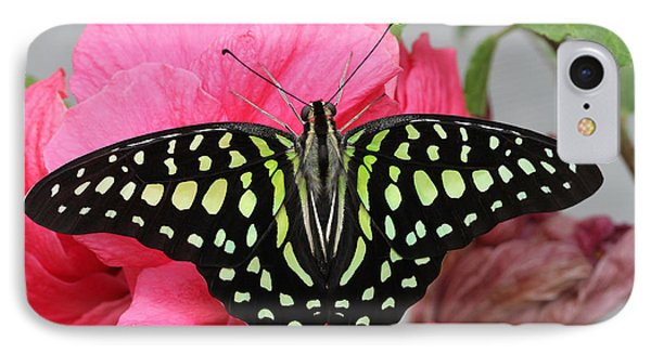 IPhone Case featuring the photograph Tailed Jay Butterfly #6 by Judy Whitton
