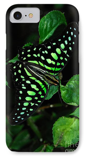 IPhone Case featuring the photograph Tailed Jay Butterfly by Eva Kaufman