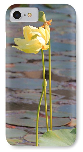 Tall And Golden IPhone Case by Rosalie Scanlon