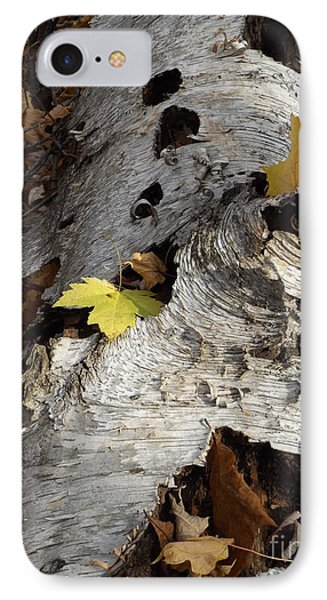 Tall Fallen Birch With Leaves IPhone Case by Erick Schmidt